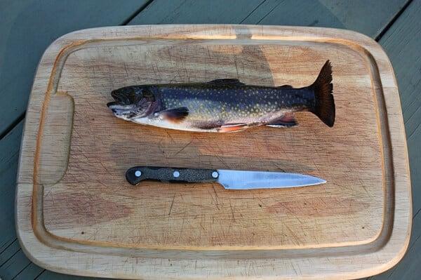 Arbeta med att rensa fisk i Norge under sommarlovet
