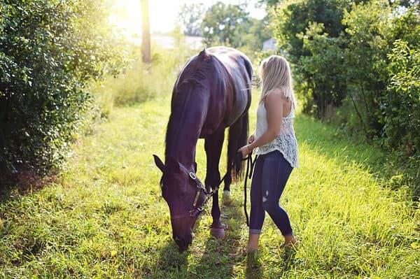 Sommarjobba med hästskötsel